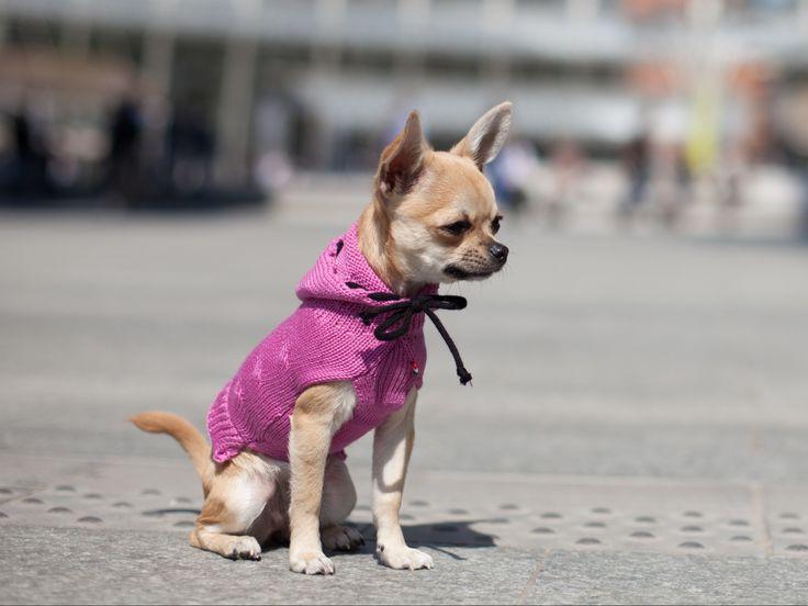 Lana Pet Model