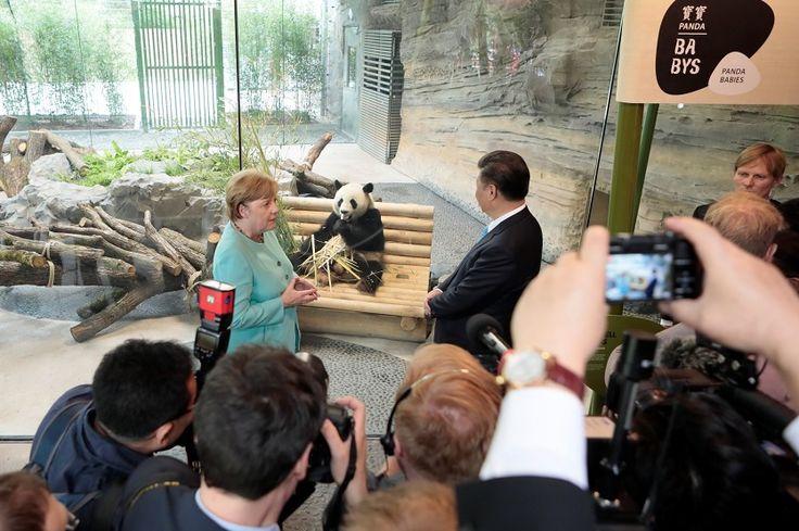 China presta dos pandas gigantes a Alemania por 15 años