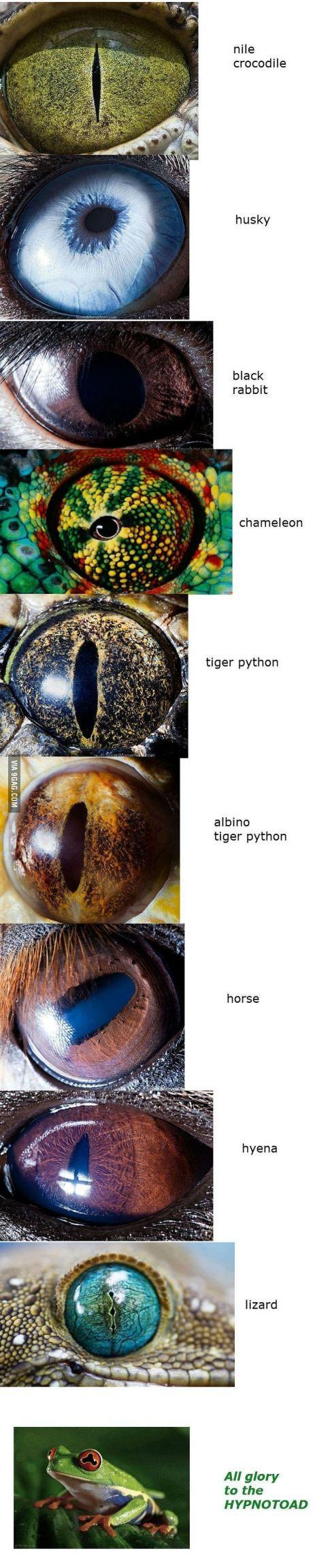 Animal eye close up Part 1