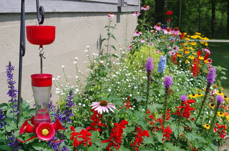 The banding station garden is full of brightly coloured flowers to attract birds to Ruthven Park.
