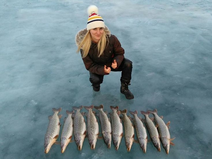 Ten beautiful pikes. Ice fishing. Alberta. Canada.