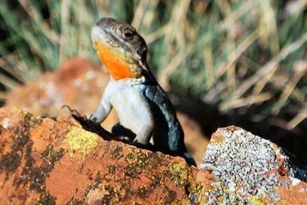 Smal lizard
