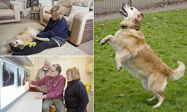 The dog with cancer who was 'healed' by love