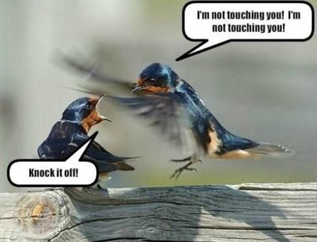 funny-animal-memes-011-003.jpg 620×473 pixeles
