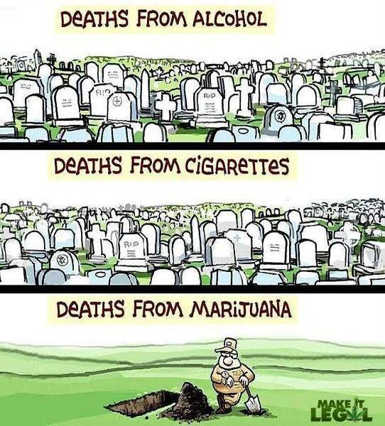 10 Basic Facts About Marijuana