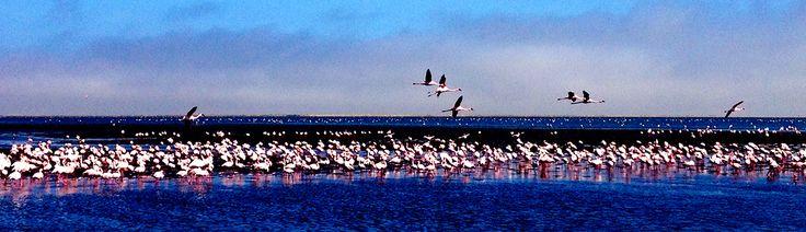 fenicotteri Walvis Bay _ Namibia
