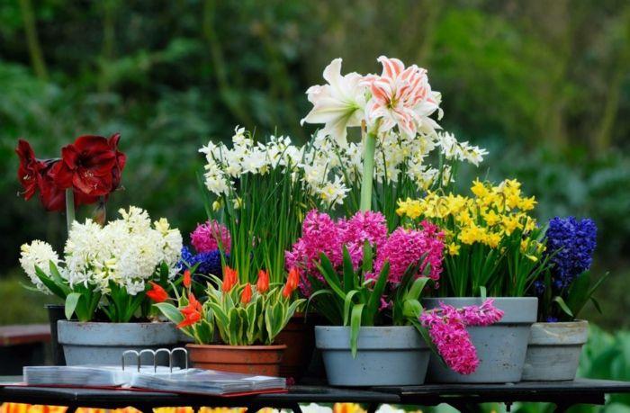 zimmer dekorieren frühjahrsblumen blumendeko