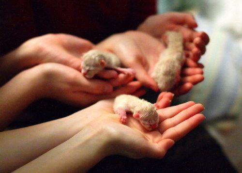 Маленькие новорожденные котята или 58 грамм от роду