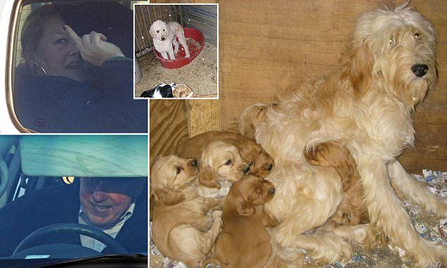 Alleged dog dealer accused of keeping puppies in squalid conditions