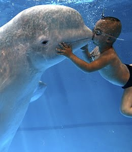 Kiss a Beluga Whale...Belugas have a large forehead, a sign of their high intelligence. Beluga whales are, in fact, the smartest animals on earth with an average I.Q. (intelligence quotient) of 155, a level that would be considered near genius in humans.