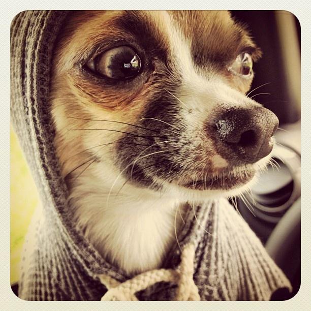 hoodie love . . .