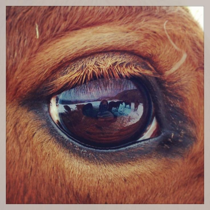 Horse eye anatomy
