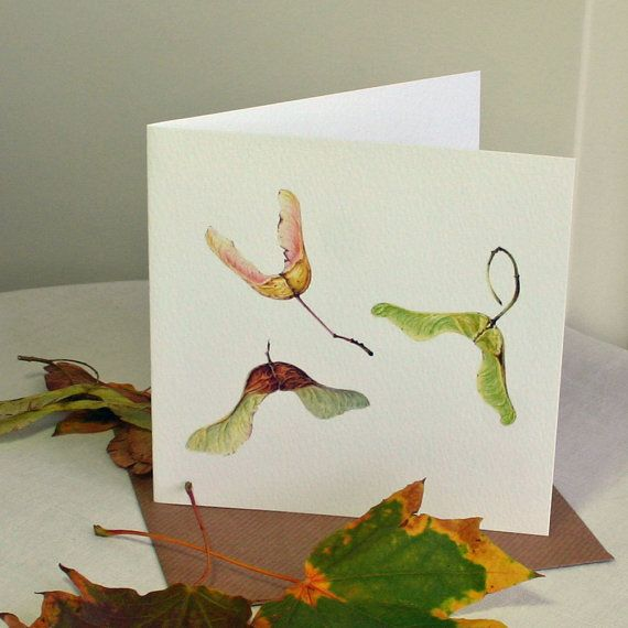 love Botanical drawings