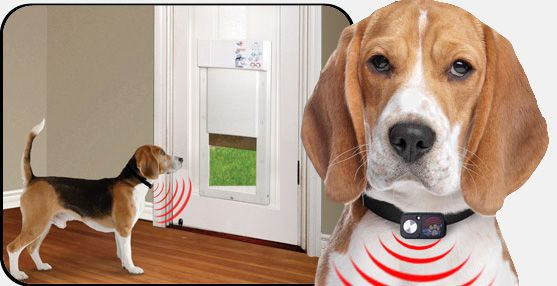 The Power Pet door .... remote control opens the door so that don't end up with a racoon in your house.