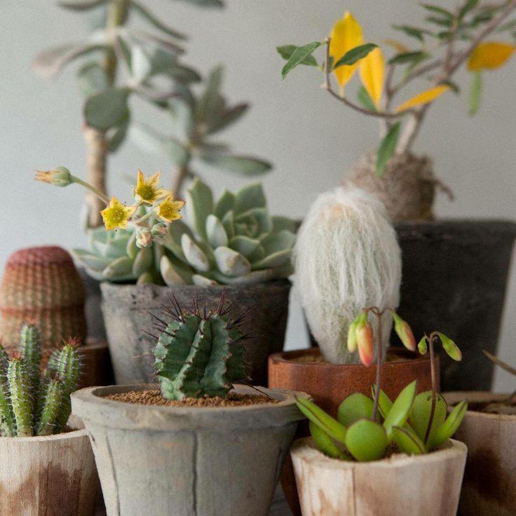 Ficker Plants
