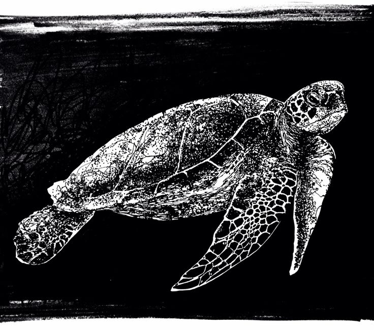 Dessin de tortue - turtle drawing Par Marythée Daigle #drawing #dessin #tortue #turtle #art #illustration