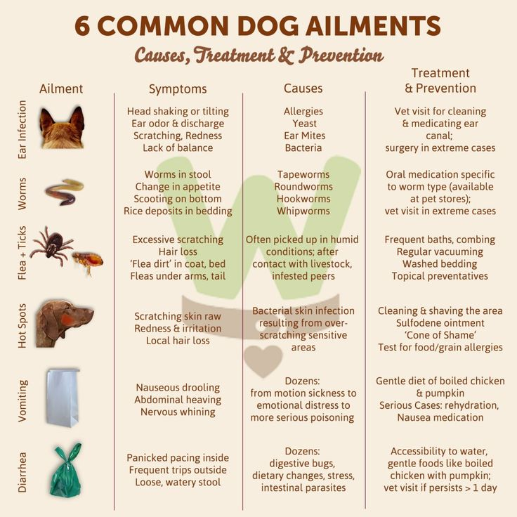 What To Do For A Sick Dog: 6 Common Ailments & Remedies   Wagwell