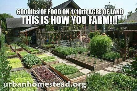 How to really grow your own food on a 1/4 acre