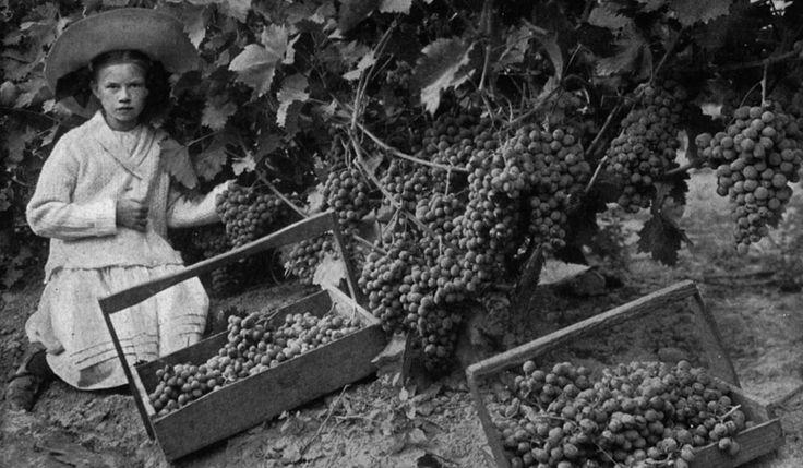 1753 Nasce l'Accademia dei Georgofili, la più vecchia accademia del vino del mondo, di cui gli Antinori fanno parte. Viene fondata dall'Abate Ubaldo Montelatici dando grande spinta alla produzione vinicola in Toscana.
