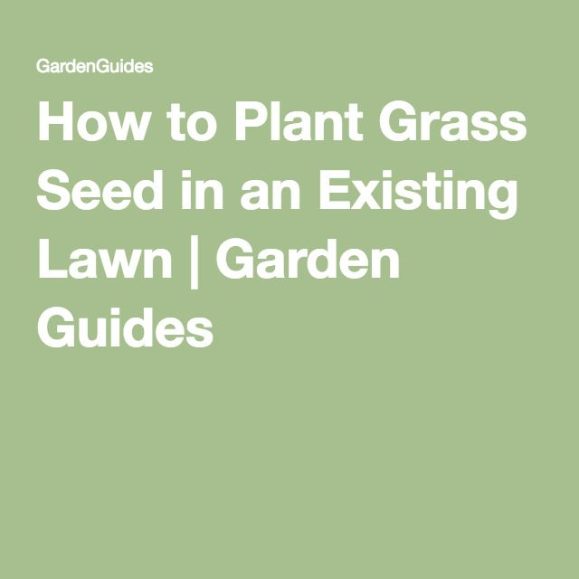 1000+ Ideas About How To Plant Grass On Pinterest | Growing Grass