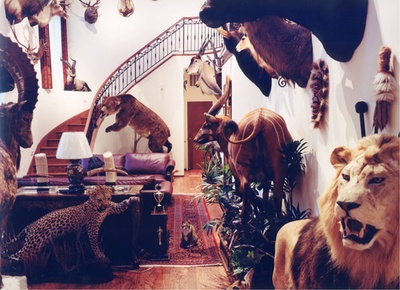 taxidermy lion, tigers and bears oh my