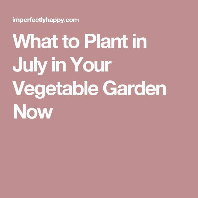 What to Plant in July in Your Vegetable Garden Now