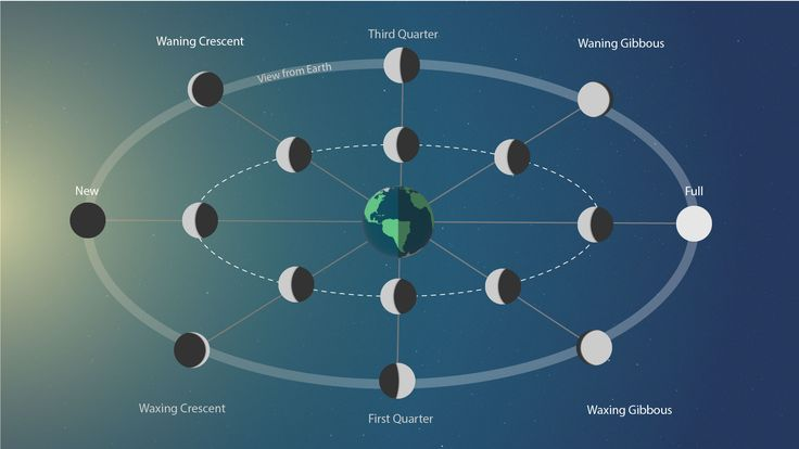 diagram showing the phases of the moon