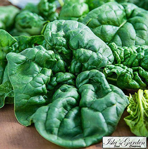 1gr to 50gr All Season Heirloom Vegetable Greens Seeds Red Acre Cabbage Seed
