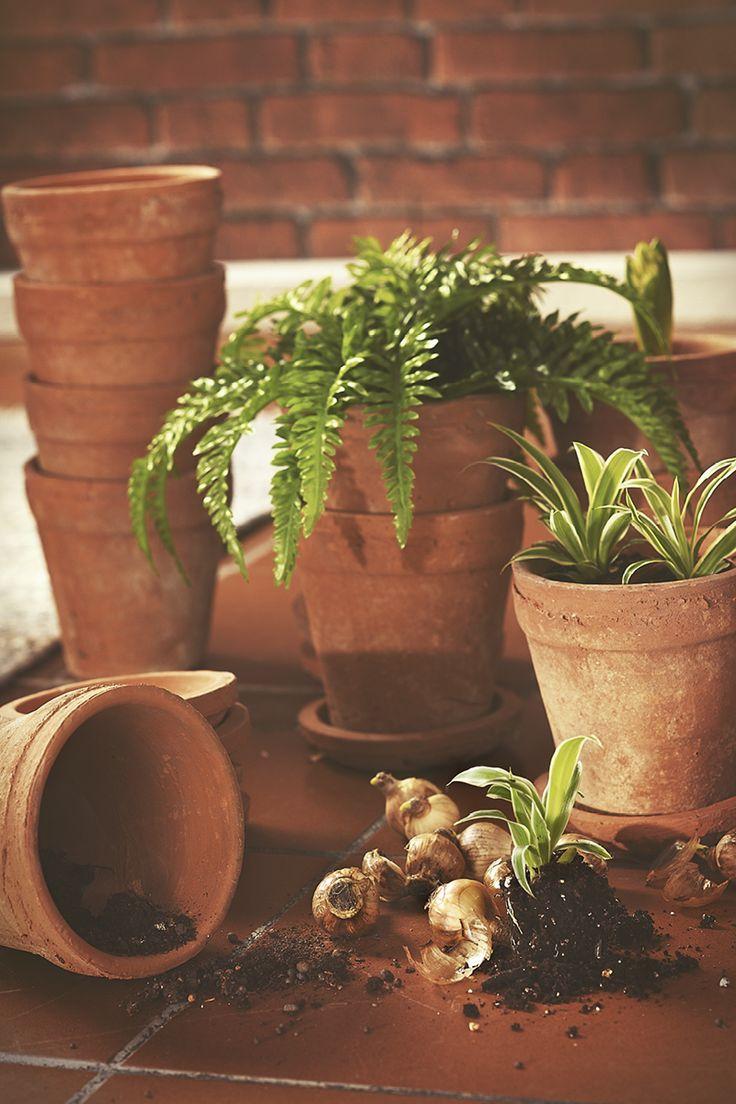 #kremmerhuset #vår #spring #botanisk #botanical #terracotta #terracottapotte #bregne #inspirasjon #husoghjem #inspiration #interior #interiør #home #dekor #pynt #vase #candles #style #vakkert #hjem #fådetfint #blomsterpotter #potteskjuler #blomsterløk