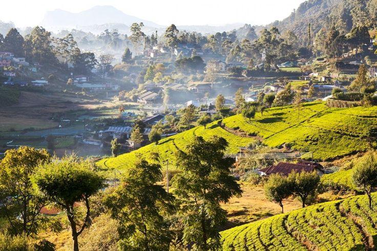 Sri Lanka, la petite île qui monte : Hiver au soleil : 30 idées de destinations - Linternaute