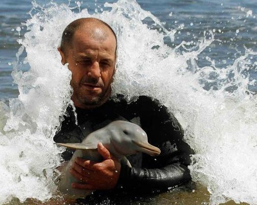 Baby dolphin: Cute Baby, Rescue Baby, Pet, Baby Animal, Men Rescue, Men Save, Natural, Baby Dolphins, Dolphins Rescue