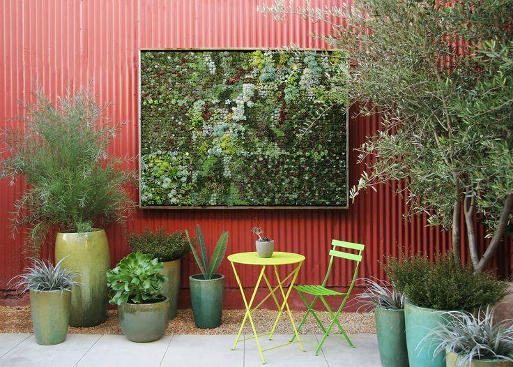 163 best tropicals garden images on Pinterest Plants
