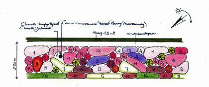 Roze,blauw en paarse border met witte accenten. Afmeting 2,5 bij 10,5 meter. Ligging op het westen (zon vanaf 13.00 uur). Planten geschikt ...
