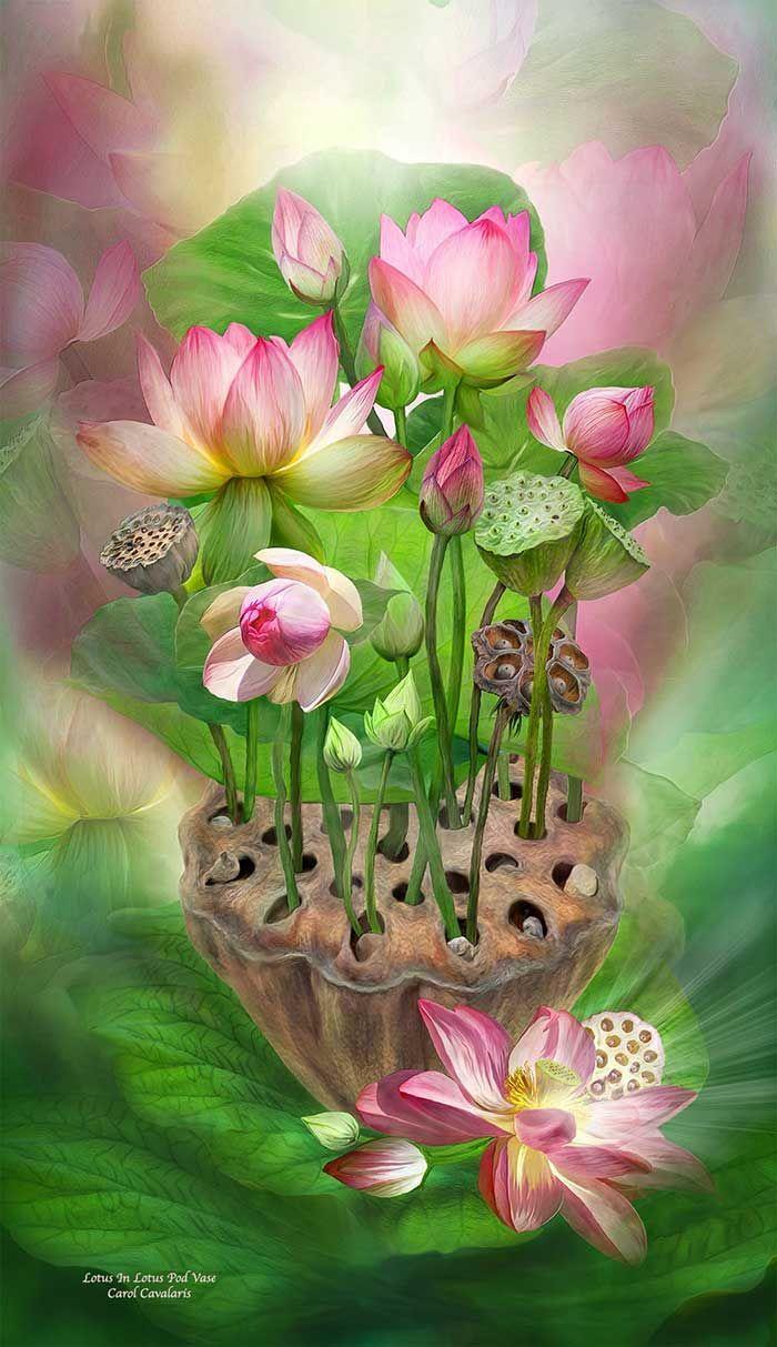 Spirit of the lotus