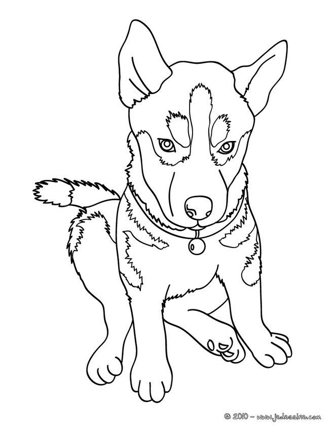 Siberian Husky Coloring Pages Dog Coloring Page Puppy Coloring