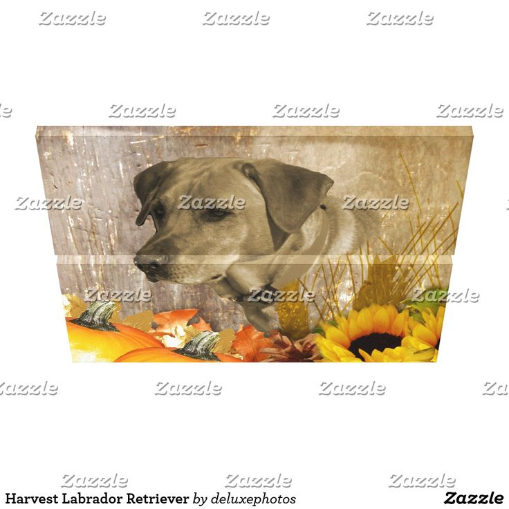 From Zazzle Harvest Labrador Retriever Canvas Print