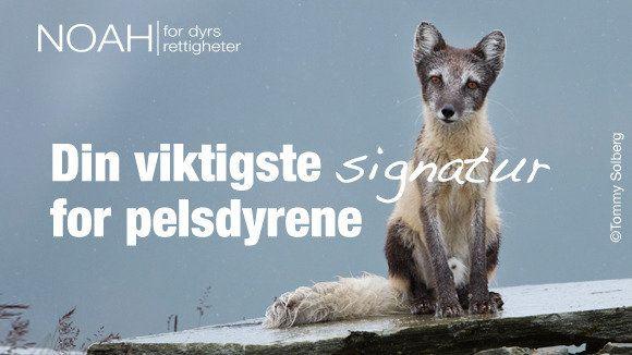 Sponsor Statsminister Erna Solberg og Stortinget: STEM FOR ET FORBUD MOT PELSDYROPPDRETT!