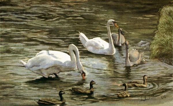 Swans watercolour I did a few years ago. http://keaneye.deviantart.com/gallery/