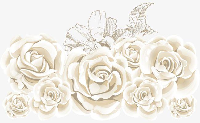 La Rose Blanche Vecteur Rose Mer La Mer En Matiere De Vecteur De Roses Les Roses De La Mer De Materiau Png Et Vecteur Roses Blanches Rose Blanche Fleurs
