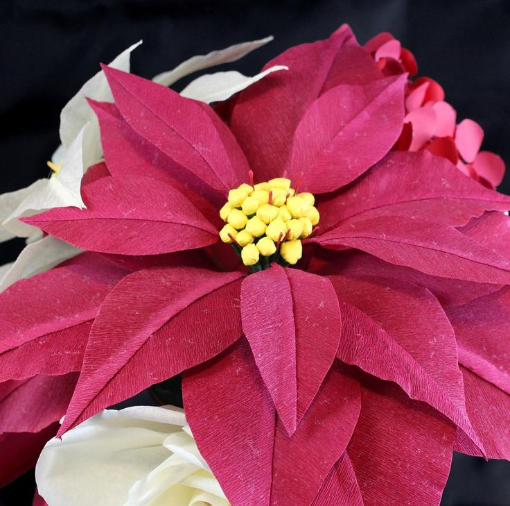 Only 90 sleeps until Christmas! Poinsettia & Christmas flowers ready to ship today or message me about custom arrangements!