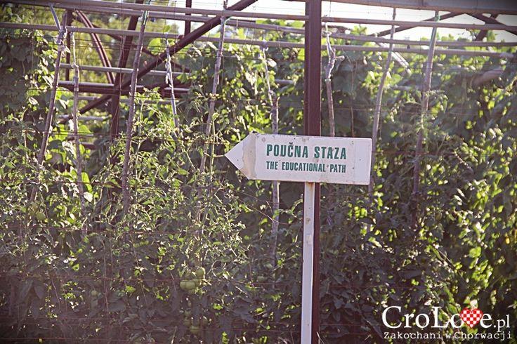 Droga do Konavoske Stijene w Popovići    http://crolove.pl/konavoske-stijene-strome-klify-poludniowej-dalmacji/    #KonavoskeStijene #Cliffs #Adriatic #Sea #PasjacaBeach #Croatia #CroatianBeach #Croatia2014 #Summer #Summer2014 #Travel #Chorwacja #Hrvatska