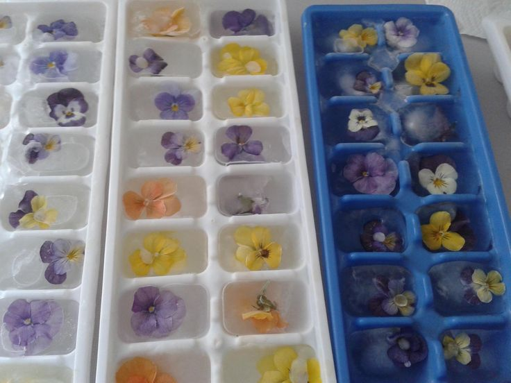 Ice cubes with Ariana's violas that we have been using in our iced teas this summer!