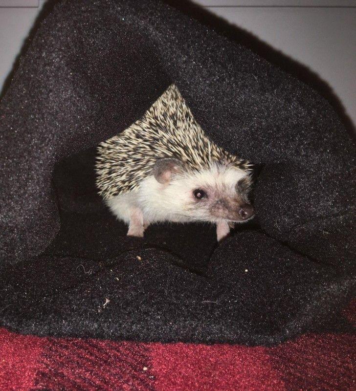 Hedgehog sleep sacks made by this baker sews