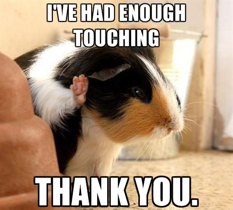 I've had enough touching, thankyouverymuch. #guineapigmeme