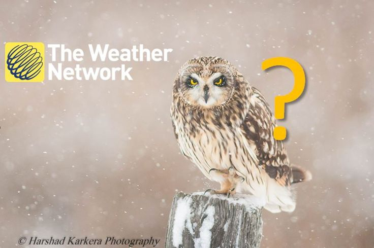 The Weather Network (@weathernetwork) | Twitter