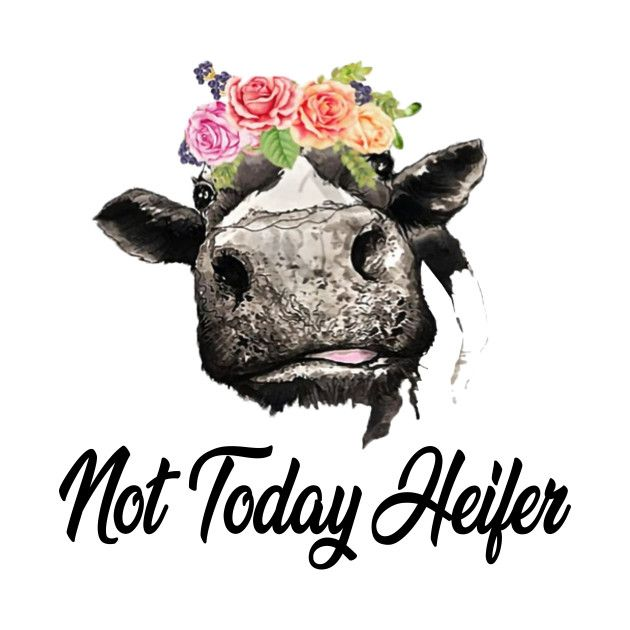 Not Today Heifer Watercolor Paintings Heifer Cow Diy