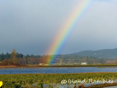 Island Rambles: Weekend Photo Time