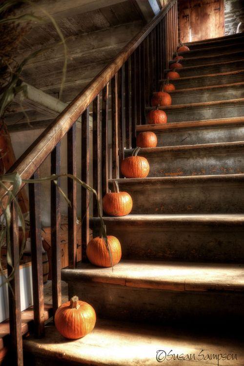 Pretty little pumpkins...all in a row <3