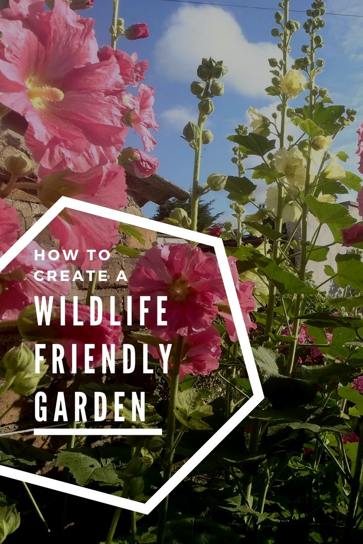 How to create a wildlife friendly garden - in the city: https://wp.me/p90hGP-4q