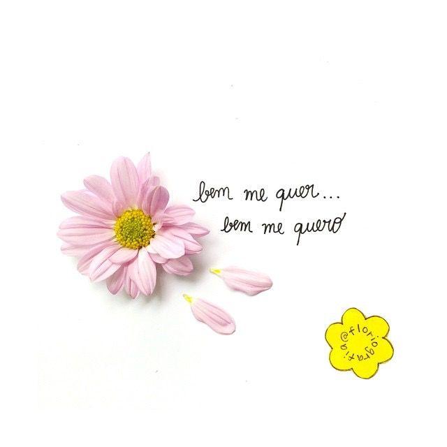Pin De Nina Sanches Em Floriografia Pinterest Quotes Frases E